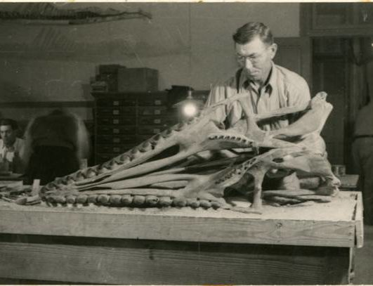 Texas Vertebrate Paleontology Collections